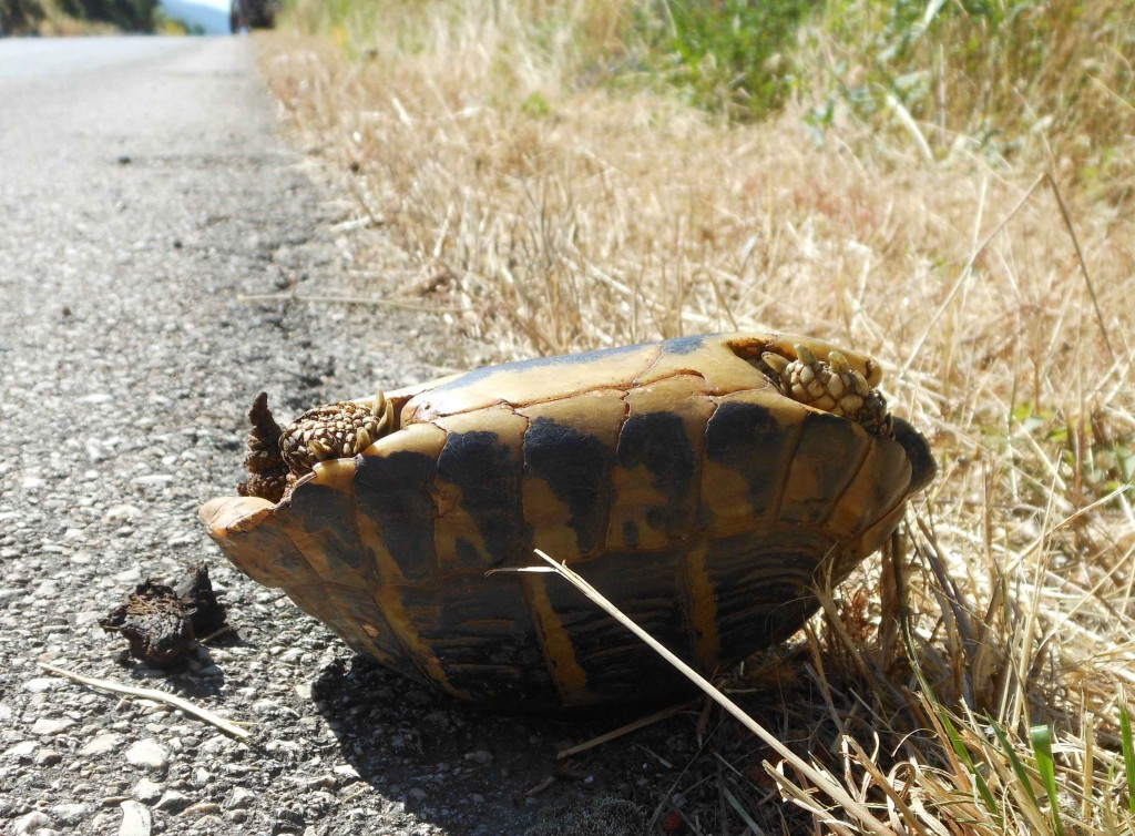 Stranded Tortoise
