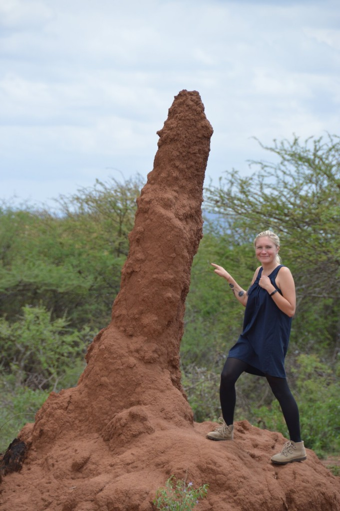 Termite houses in the south of Ethiopia, there were so many!
