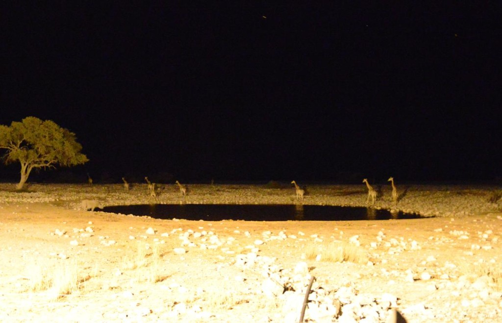 Floodlit Artificial Waterhole - Bringing the Wildlife to the Guests