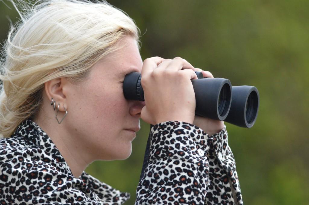 Katana watching wildlife