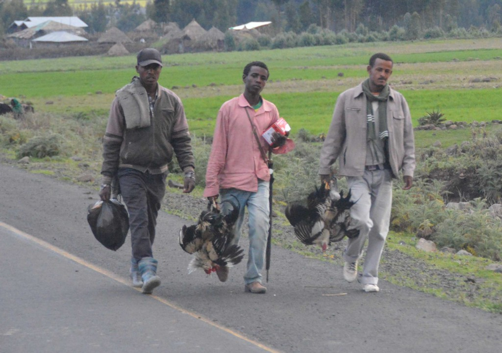Men carrying live chickens upside down to be sold and/or butchered (Ethiopia)