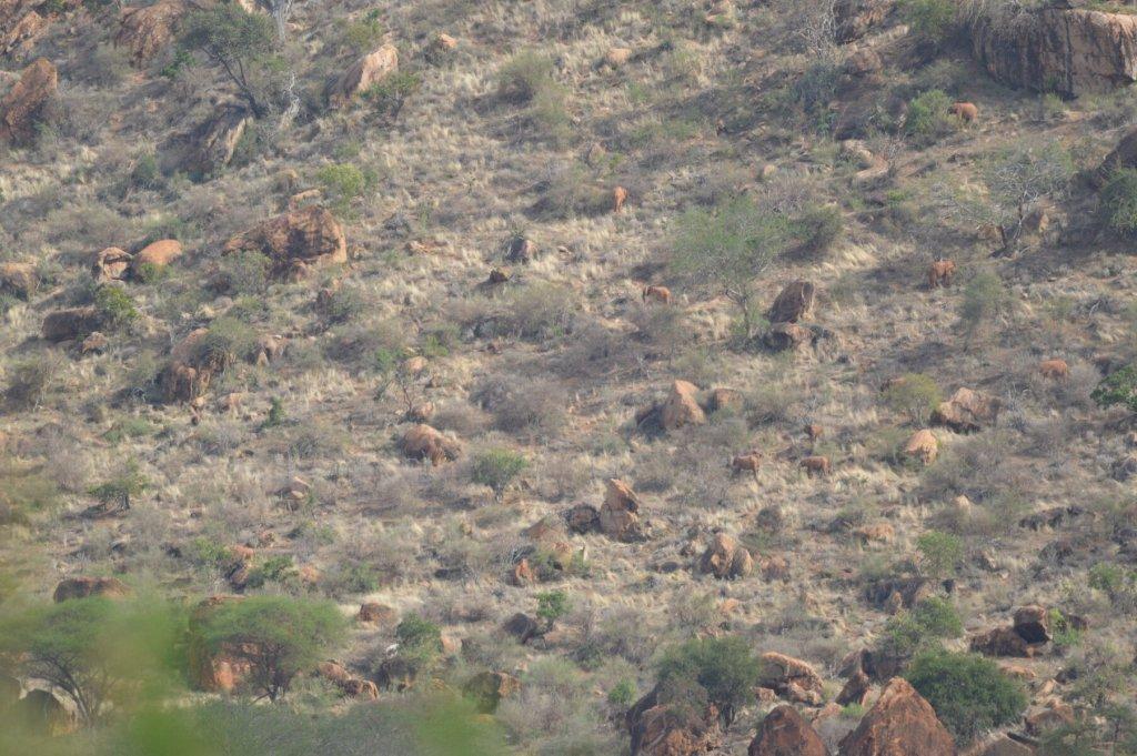 Spot the Elephants