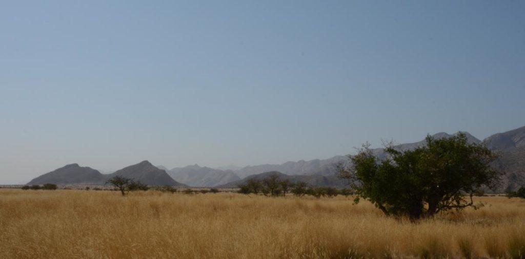 Valley Grasslands